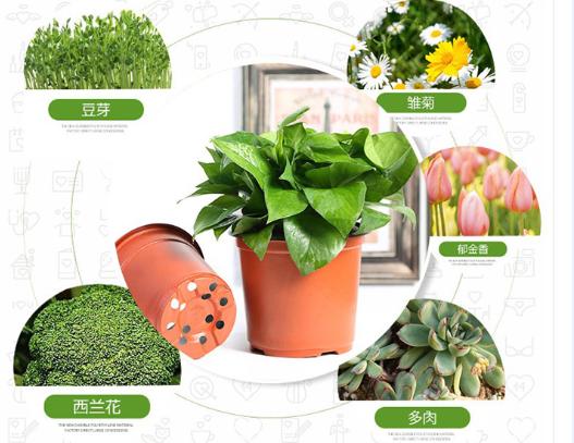 flower-pot 2 .jpg
